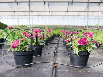 Deker Horticultural Irrigation