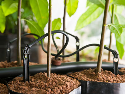 Deker Hort Drip Irrigation