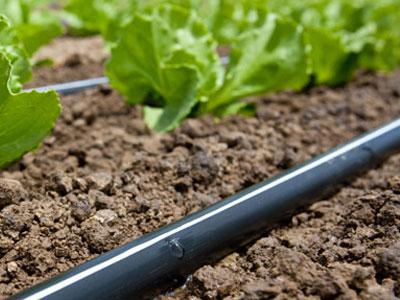 Deker Hort Irrigation T-Tape