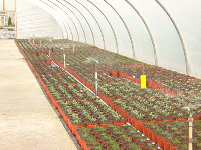 Deker Hort Overhead Irrigation Tunnels, Glasshouses & Outside Beds